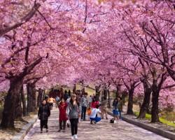 SEOUL – NAMI – NAMSAN TOWER – EVERLAND – DRAWINGSHOW (5N4Đ)