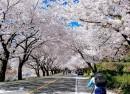 Du Lịch Hàn Quốc: Hà Nội – Seoul – Nami – Everland (5N4Đ)