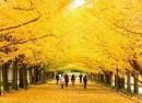 Seoul – Đảo Jeju – Everland – Công viên bầu trời – Tháp truyền hình Seoul – Đảo Nami (6N5Đ)