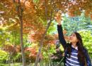 KHÁM PHÁ HÀN QUỐC: SEOUL – NAMI – EVERLAND 6N5Đ